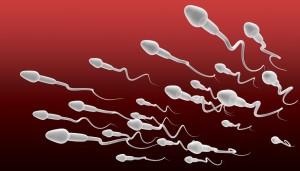 sperm-300x171